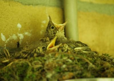 Nest vogels